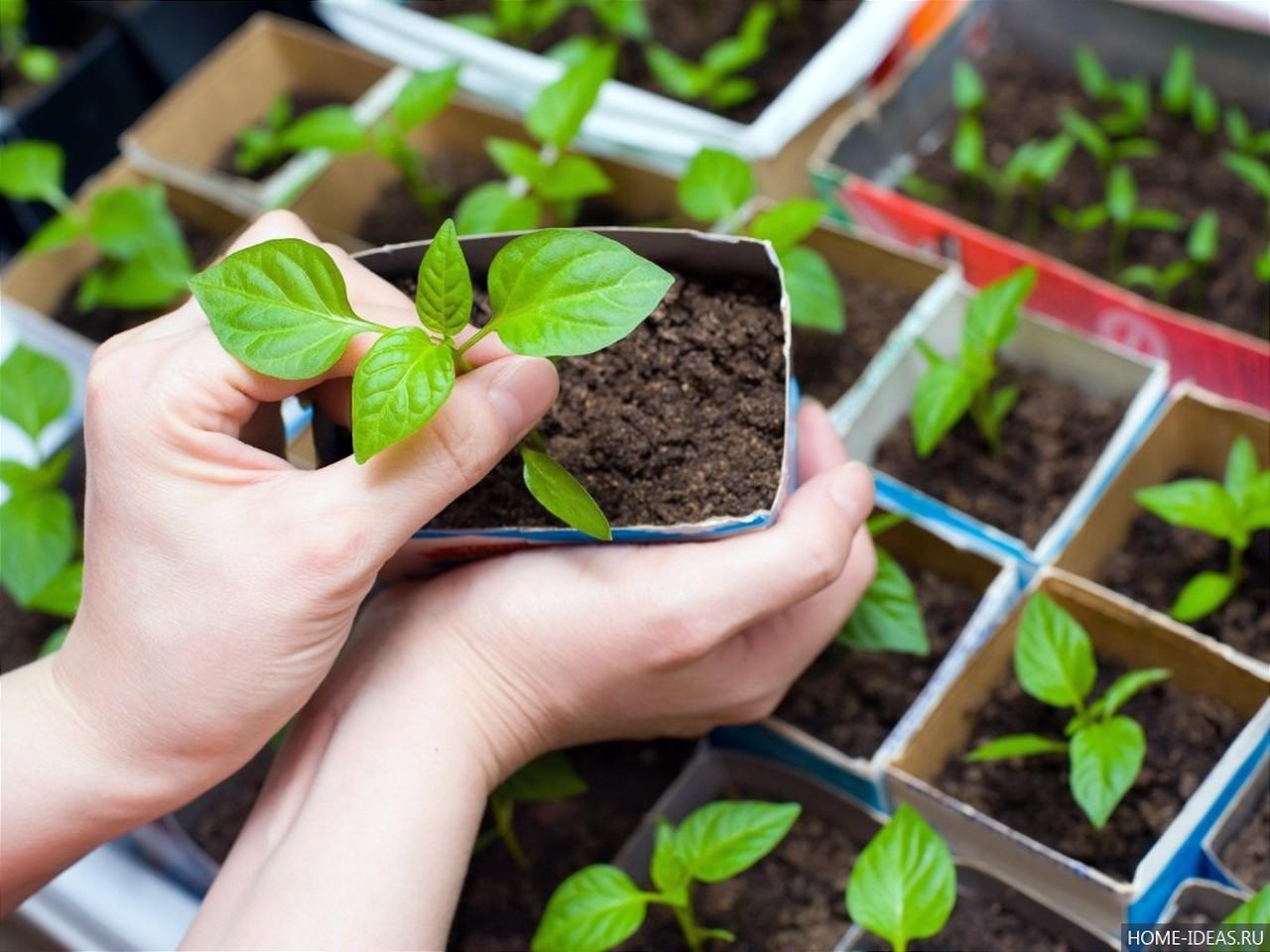 """В клубе садоводов-любителей """"Волжанка"""" состоится занятие по теме """"Способы выращивания рассады"""" (лектор - кандидат сельскохозяйст"""